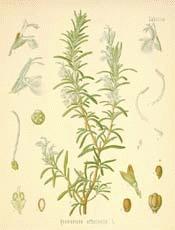 rosema17-s.jpg